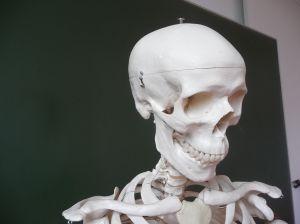 1187804_skeleton_2.jpg