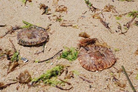 6月12日は大島でビーチコーミング&ビーチクリンアップ