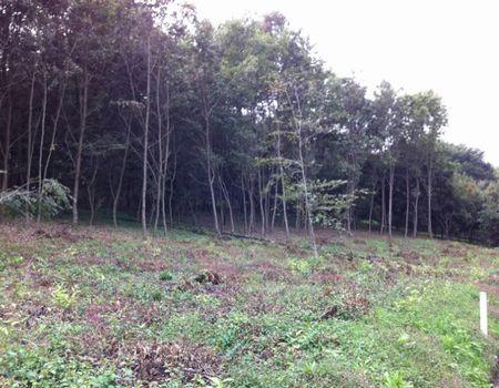 14年前に植林したクヌギ林のその後