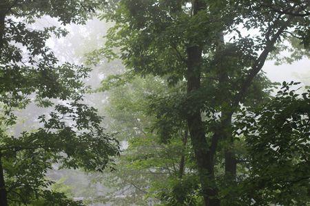 霧のむこうのふしぎな町